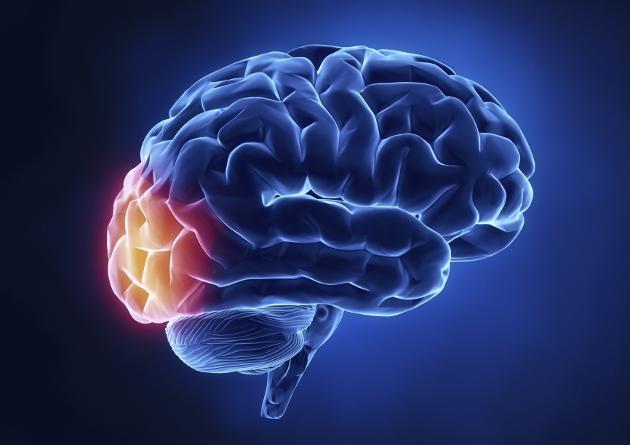 Mitos-cientificos- los-seres-humanos-usamos-un-10-de-nuestro-cerebro-1