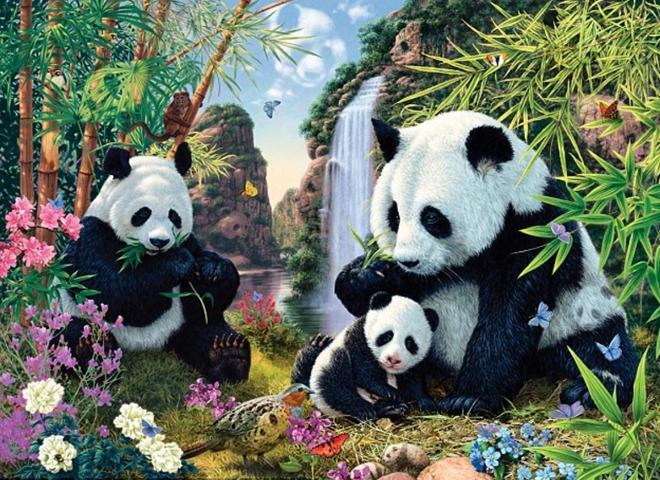 pandas-encuentras-imagen-kh5-U201218724034XgB-660×480@Las Provincias