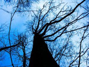 tree-200221_1280