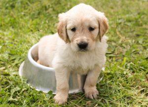 Educar-un-cachorro