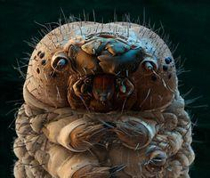 Your_eyes._Your_makeup._A_case_of_demodex_mites-2_large