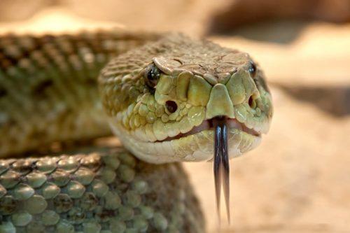 que significa soñar con viboras y serpientes