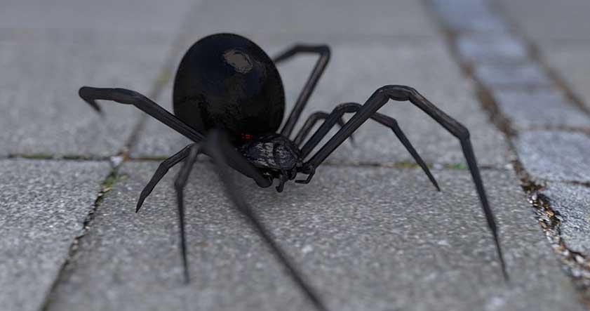 arana-viuda-negra