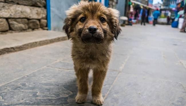 beneficios adoptar perro