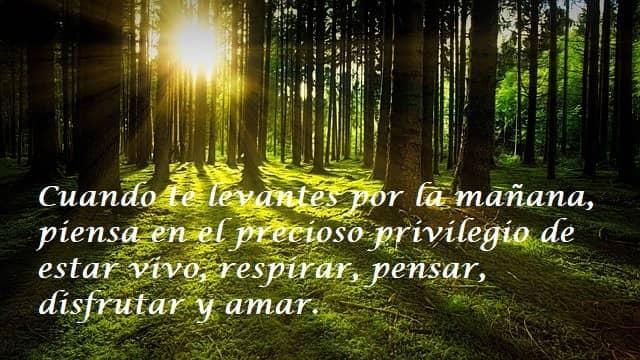 Cuando te levantes por la mañana, piensa en el precioso privilegio de estar vivo, respirar, pensar, disfrutar y amar.