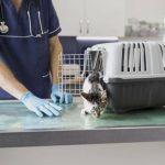 animals health